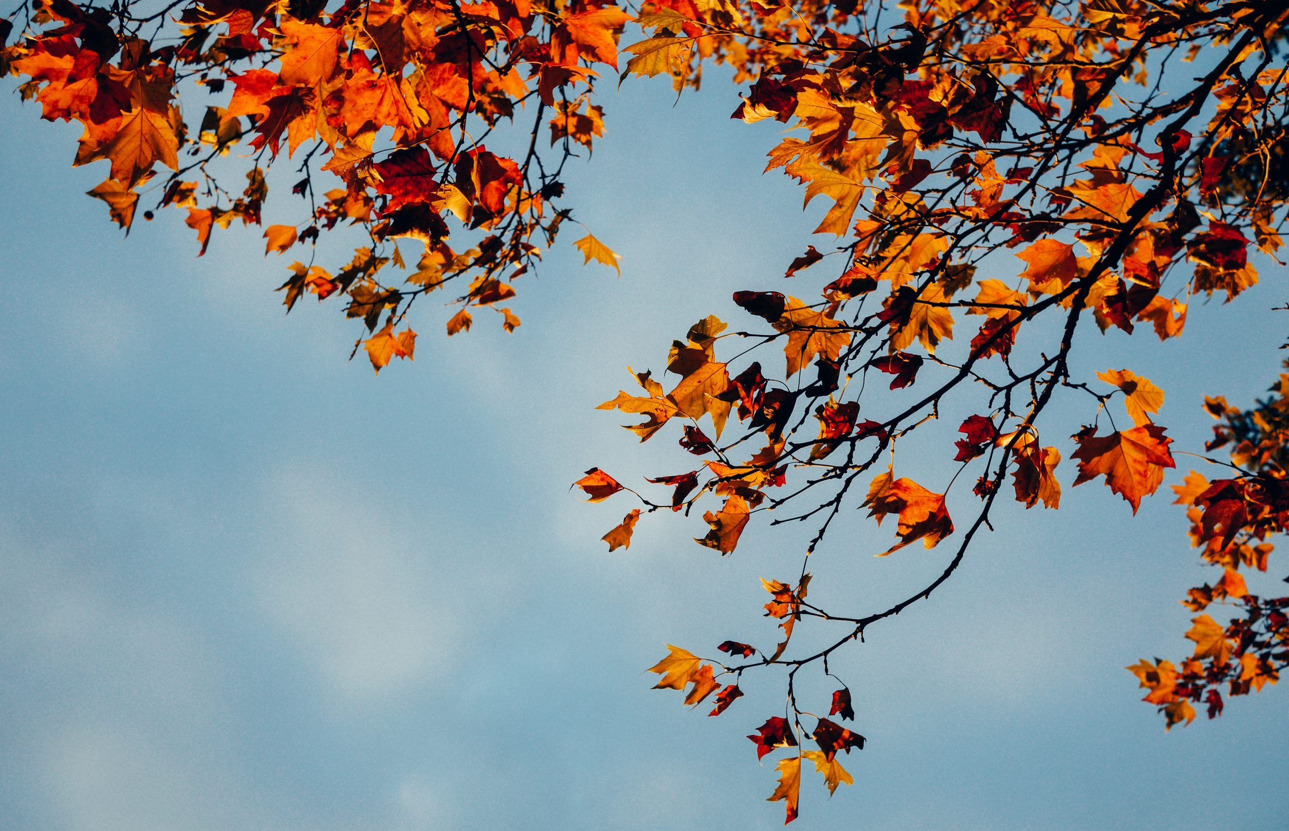 Photo of fall leaves against blue sky